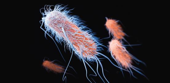 Les super-bactéries gagnent du terrain