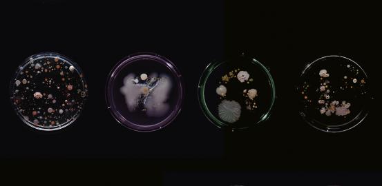 Bacteria: friend and foe