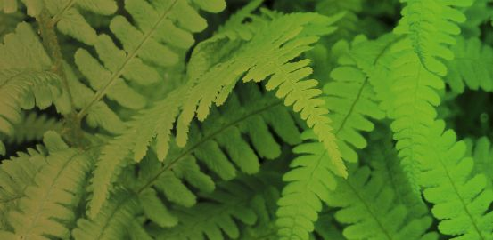 Increasing plant performance by altering water tightness