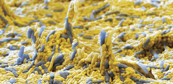 Microbes, our 